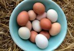 6 Eggs a Day Weight Loss